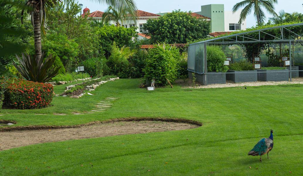 Casa Velas Hotel, Puerto Vallarta Botanic Garden
