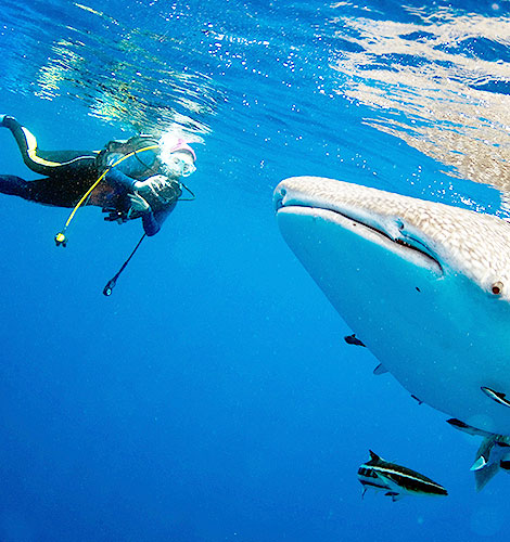 Scuba Diving & Snorkeling in Mexico
